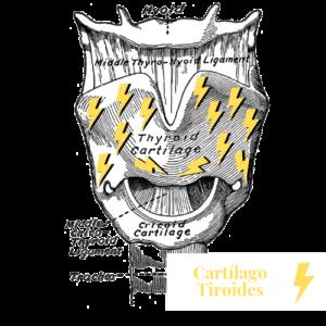 Cartílago Tiroides