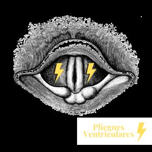 encantar con tu voz cursos online de canto pliegues ventriculares
